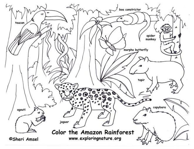 rainforest amazon summer